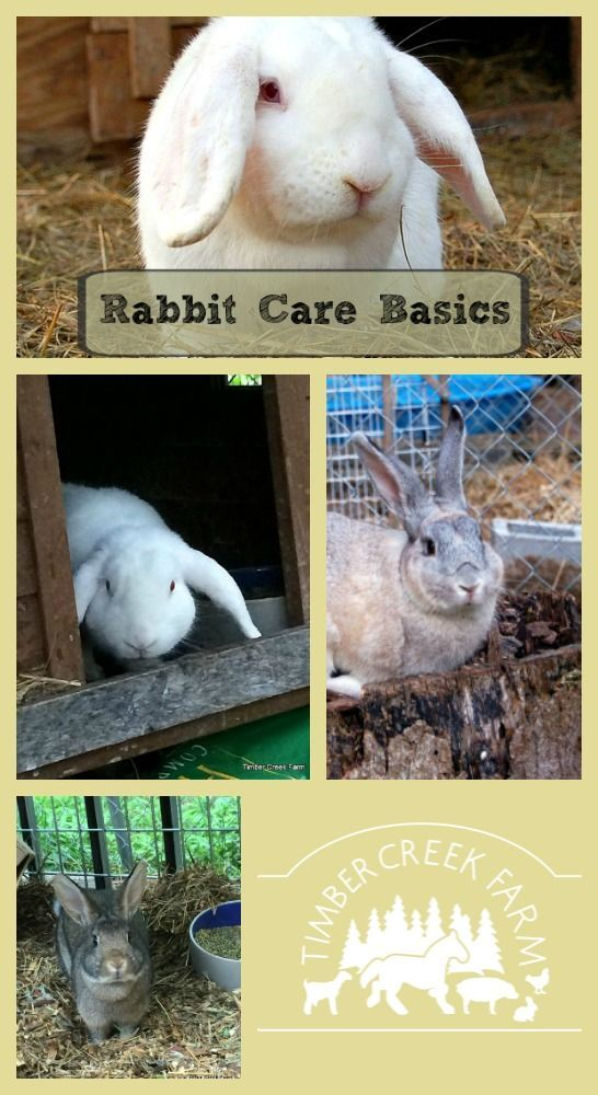 Rabbit Care Basics Getting Started With Images Rabbit Care Class Pet Rabbit Farm