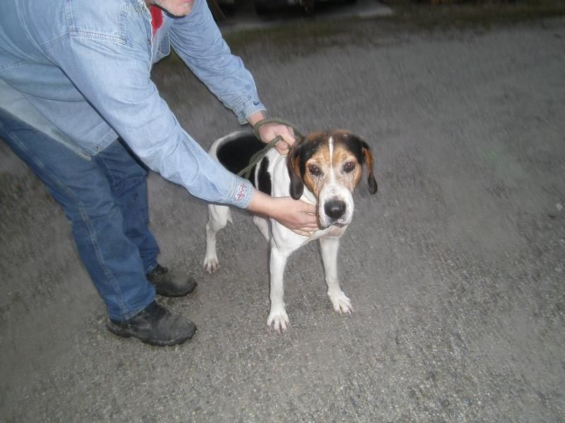 11+ Marysville animal care center images
