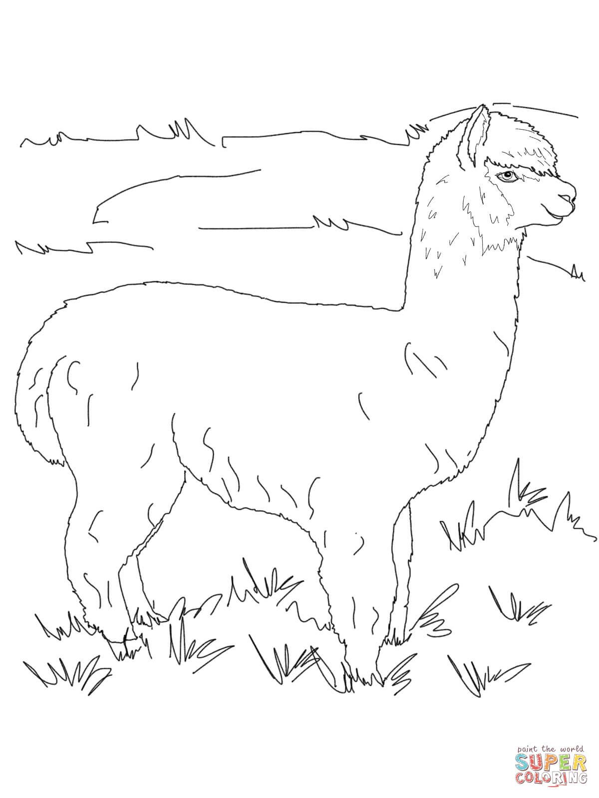 Alpaca coloring pages Free Coloring