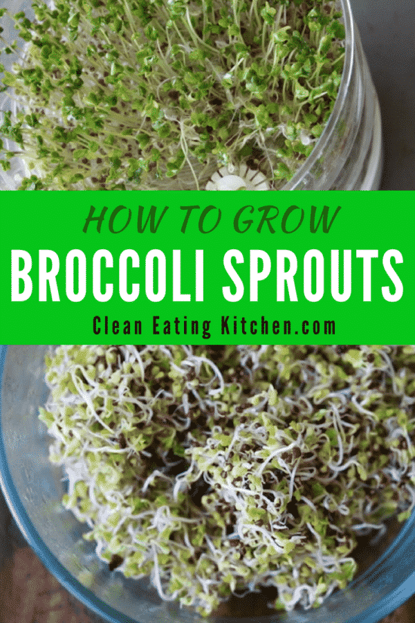 Stop buying broccoli sprouts and make your own for all you sandwich, wrap, or salad needs. How to grow broccoli sprouts on your kitchen countertop for ...