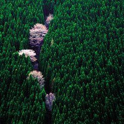 フォトコンテスト:フォトコン写真ギャラリー 2006年入賞作品|写真現像・フォトブック・カメラ販売-キタムラグループ-