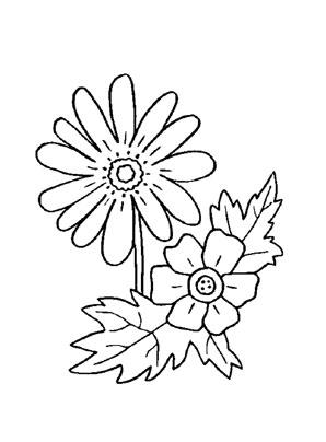 Ausmalbild Anemone Blumen Ausmalbilder Anemone Ausmalen