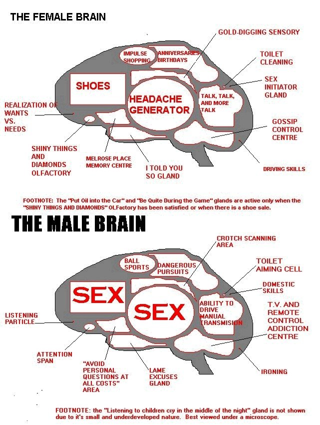 Is there a difference between male and female brains