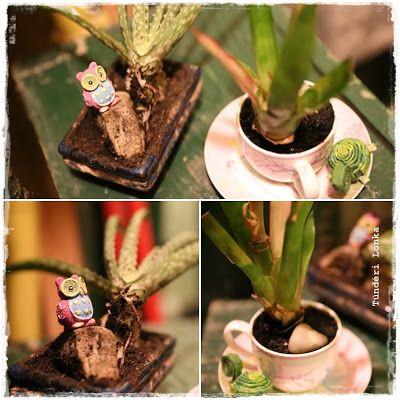 Tündéri Lonka: Növény mint dekoráció
