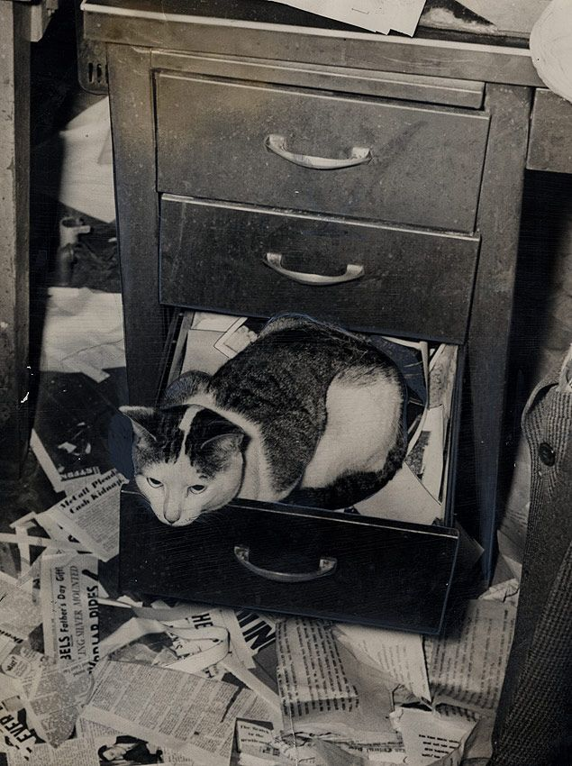 Hypo, The Journal-American's Office Cat