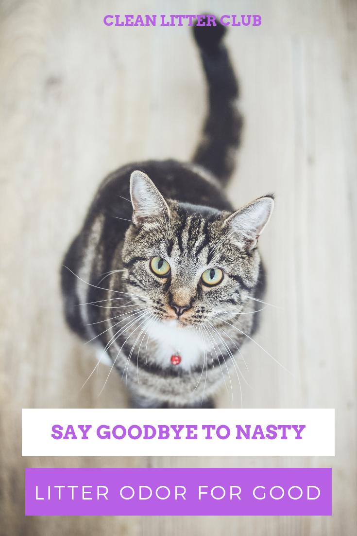 SIFTEASE METHOD Best cat litter, Tabby cat, White tabby cat