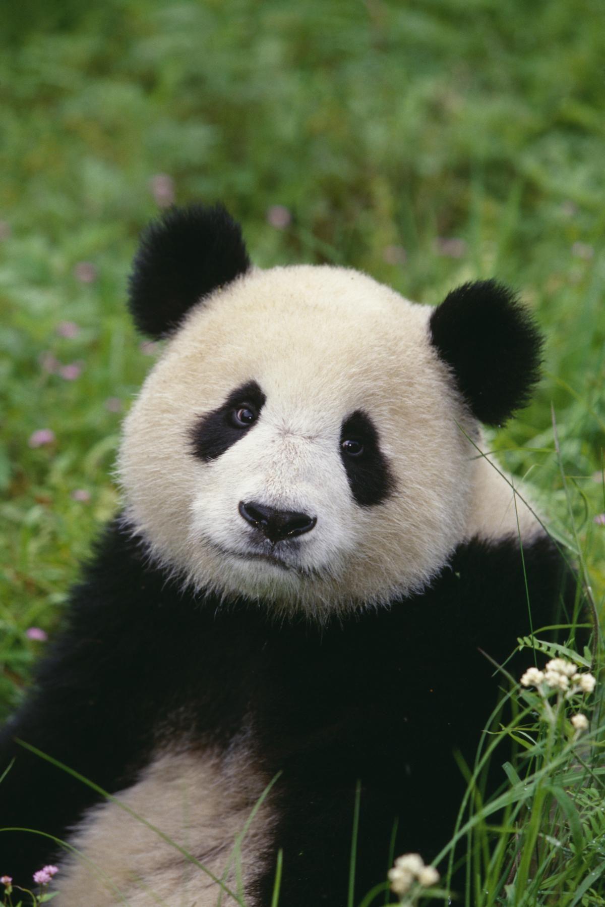 Discussions Endangered rainforest animals, Rainforest