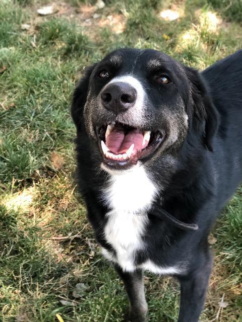Adopt Link On Pet Adoption Center Pet Adoption Adoption