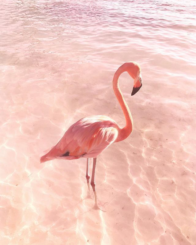Pink Flamingo 12thtribevibes Shop12thtribe Flamingo Kunst Tiere Und Haustiere Susse Tiere