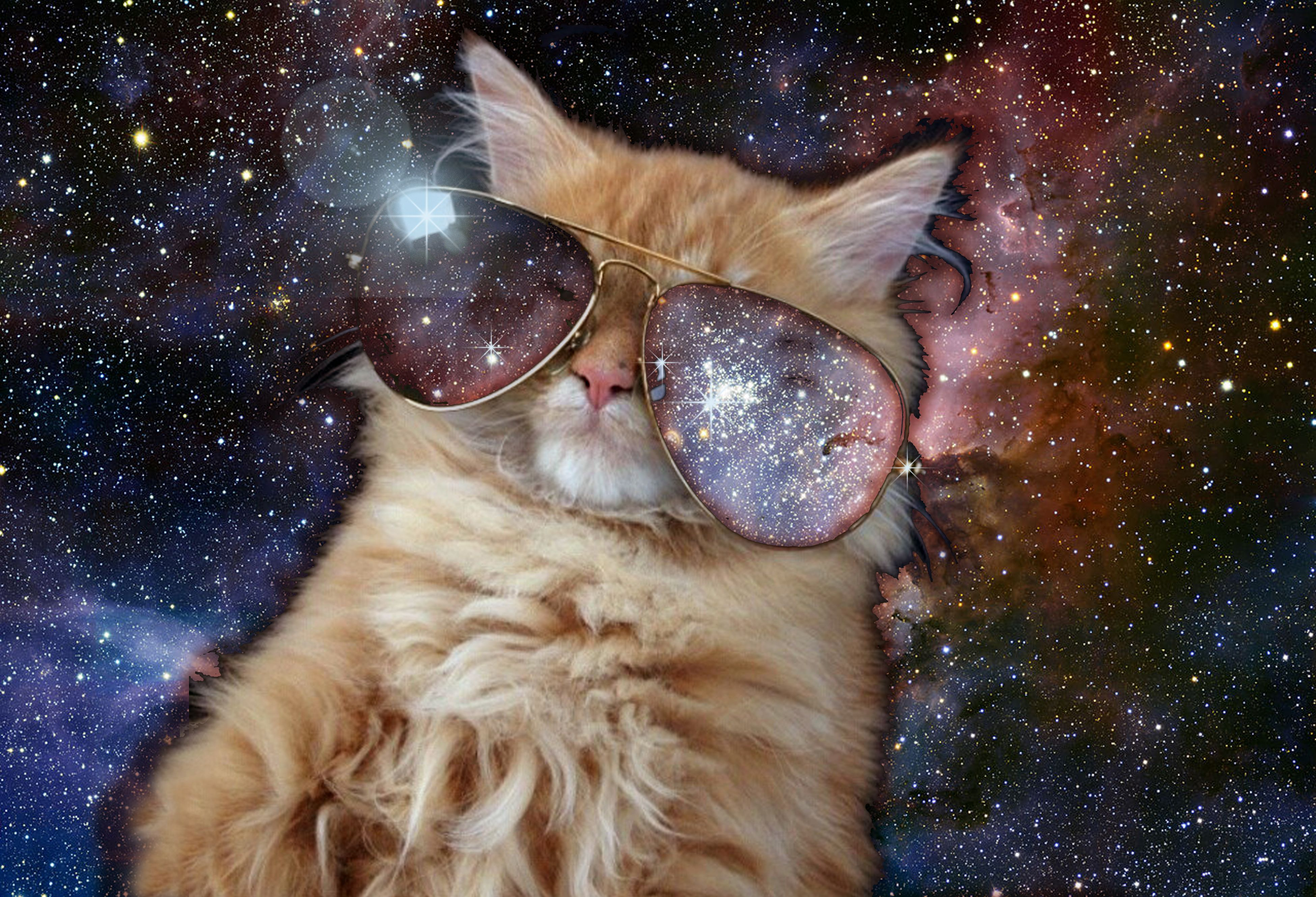 The 'Cat in Carina' I made a few years ago for r/spacecats 3900  2660.