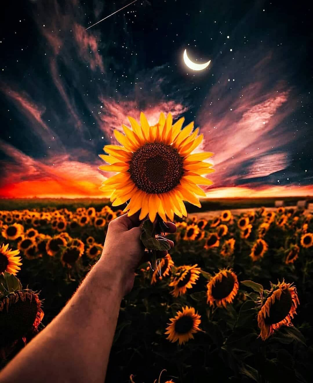 Hermoso Paisaje Beautiful Landscape Sunflower Sunflowers