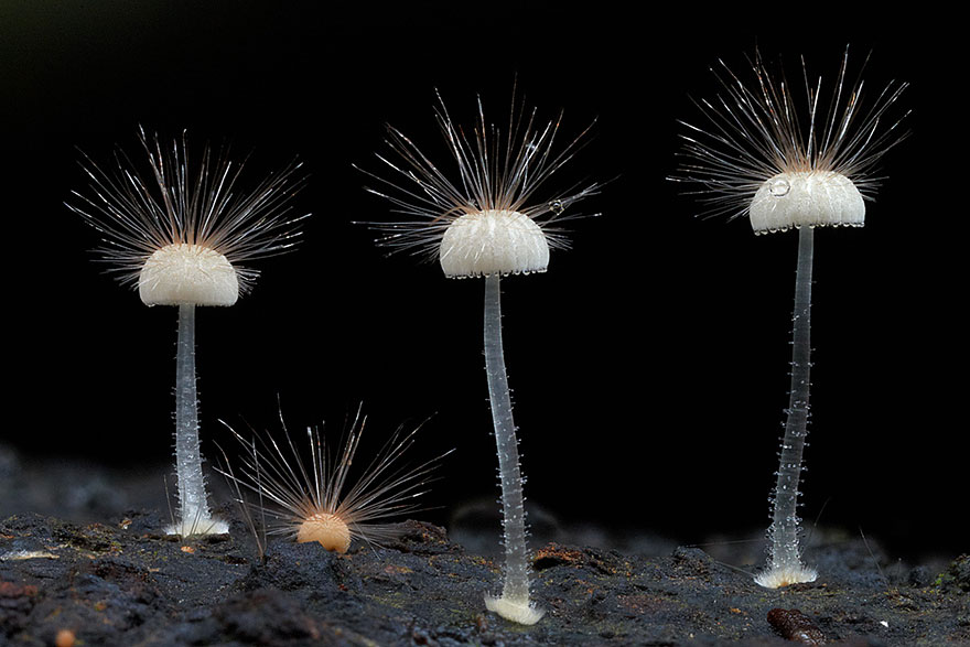 Beautiful Mushroom 13