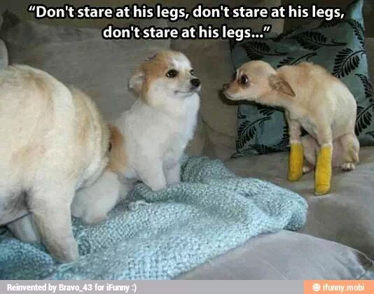 The dog's face! Priceless