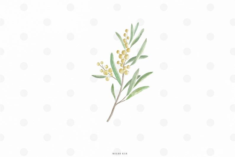 Watercolor Olive Branch Transparent Background Commercial Use Decal Clip Art Png Printable Il