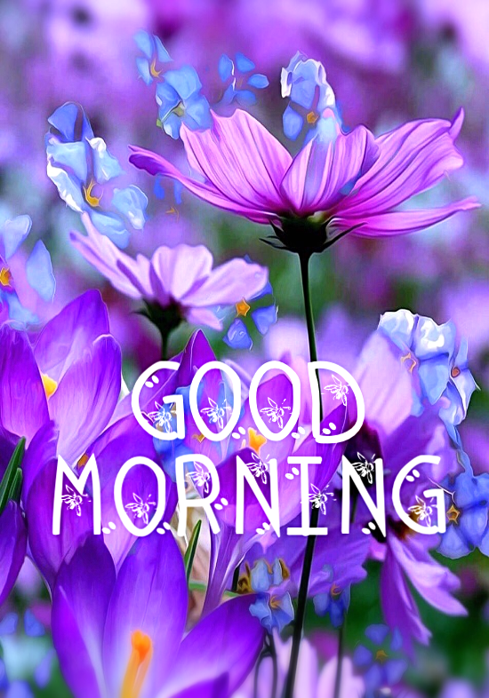 Good Morning Sweetie Pie Praying You Have A Really Lovely Day Today God Bless You My Good Morning Flowers Good Morning Beautiful Images Good Morning Prayer