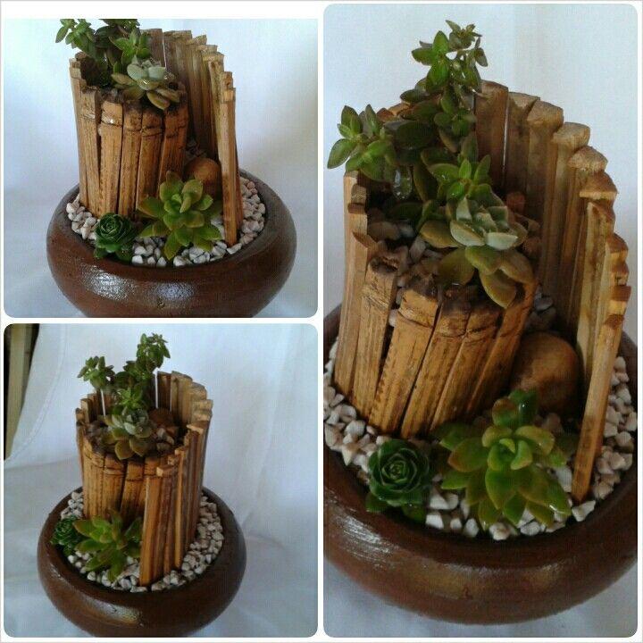 Mini jardin de Suculentas