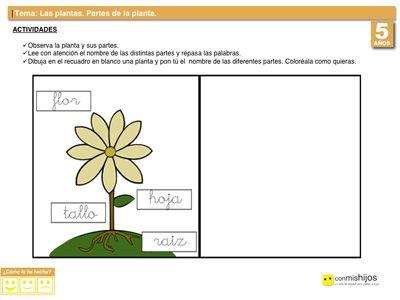 Partes De Una Planta Actividades Escolares Para Niños Actividades Escolares Partes De La Planta Partes De La Misa