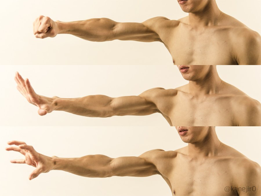 Love this example of muscle definition | Anatomía | Pinterest ...