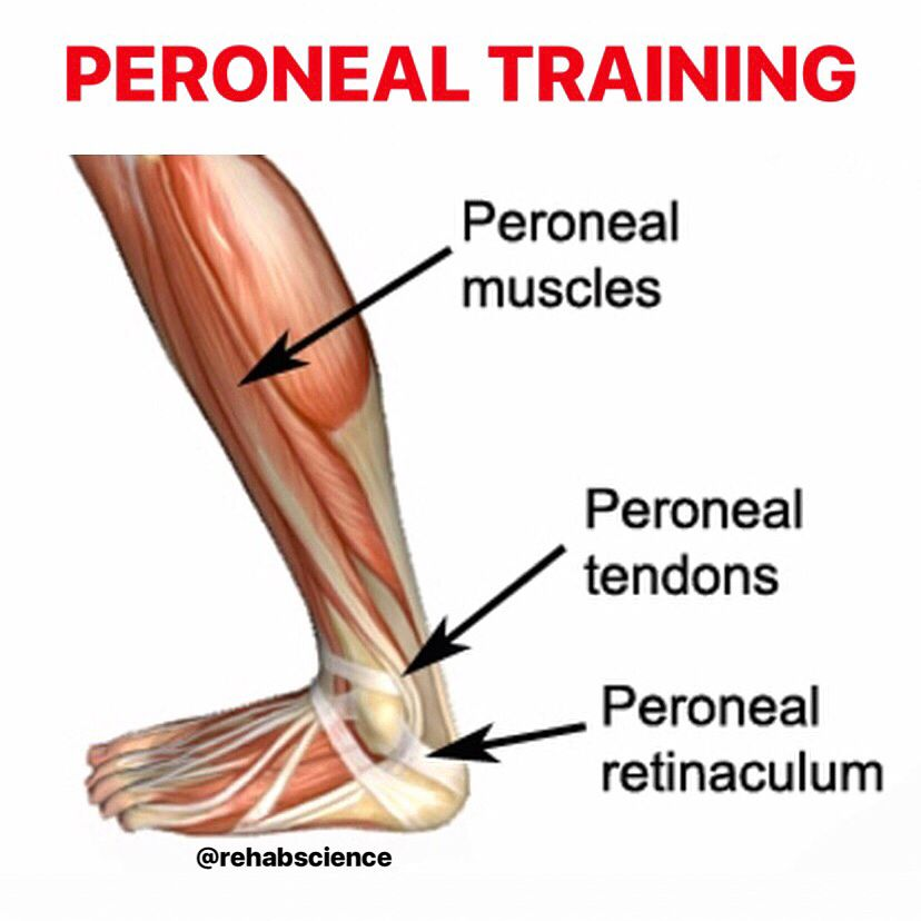 Peroneal Training The Peroneal Muscles Evert And