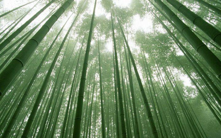 Bamboobies