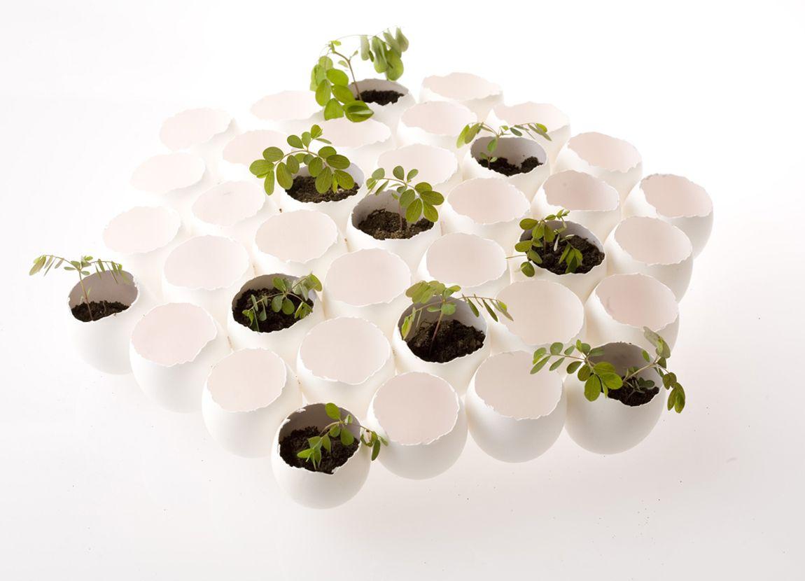 Eggshell Art by Nosigner