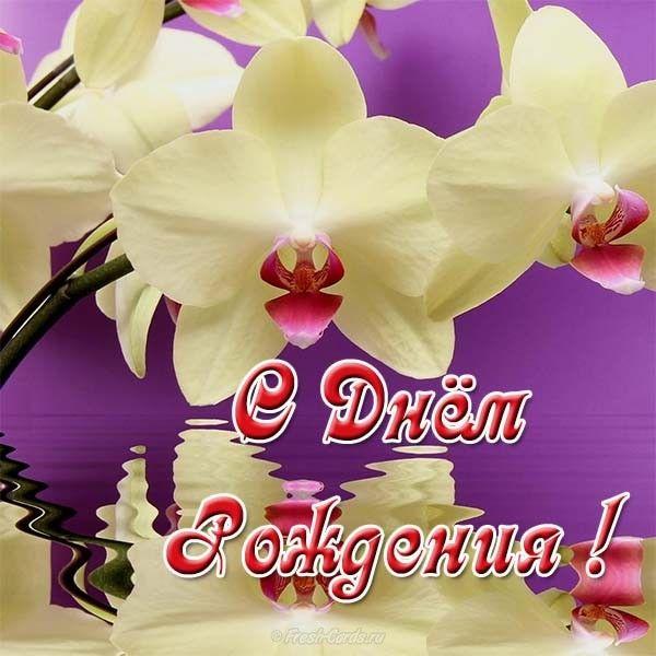 Дню, картинка с днем рождения орхидеи
