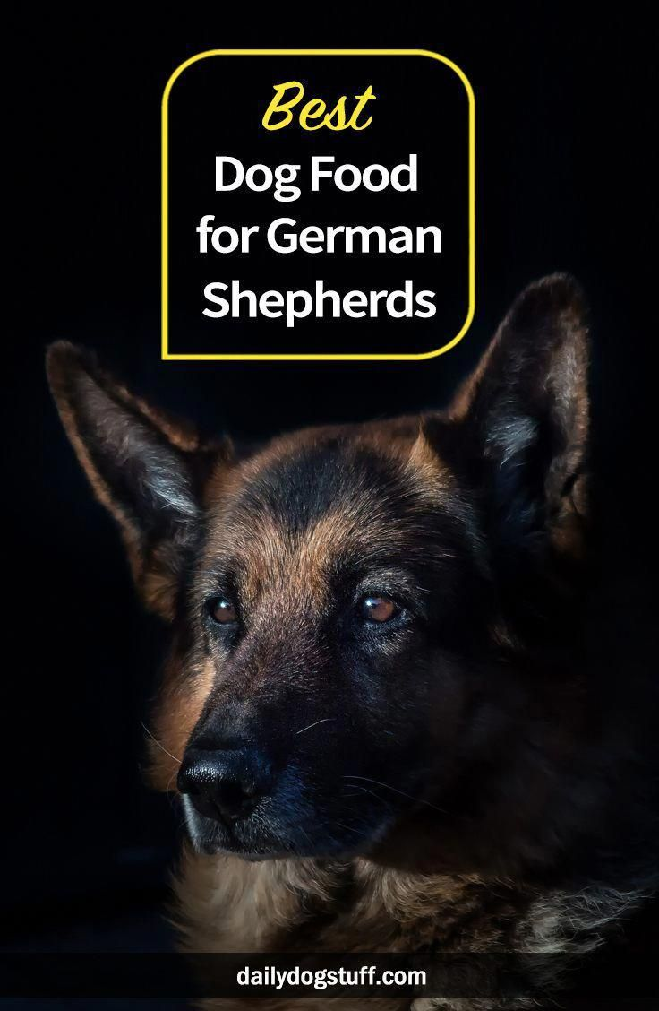 Best dog food for german shepherds try these daily dog
