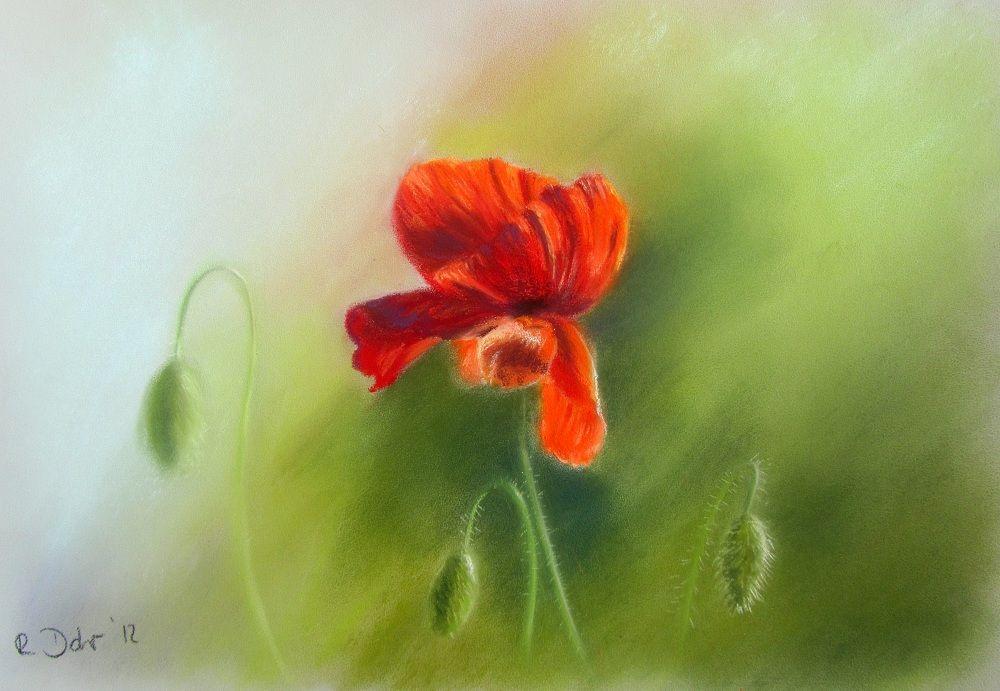 Mohnblume Wer Malt Was Die Kunst Community Pinterest Pastell