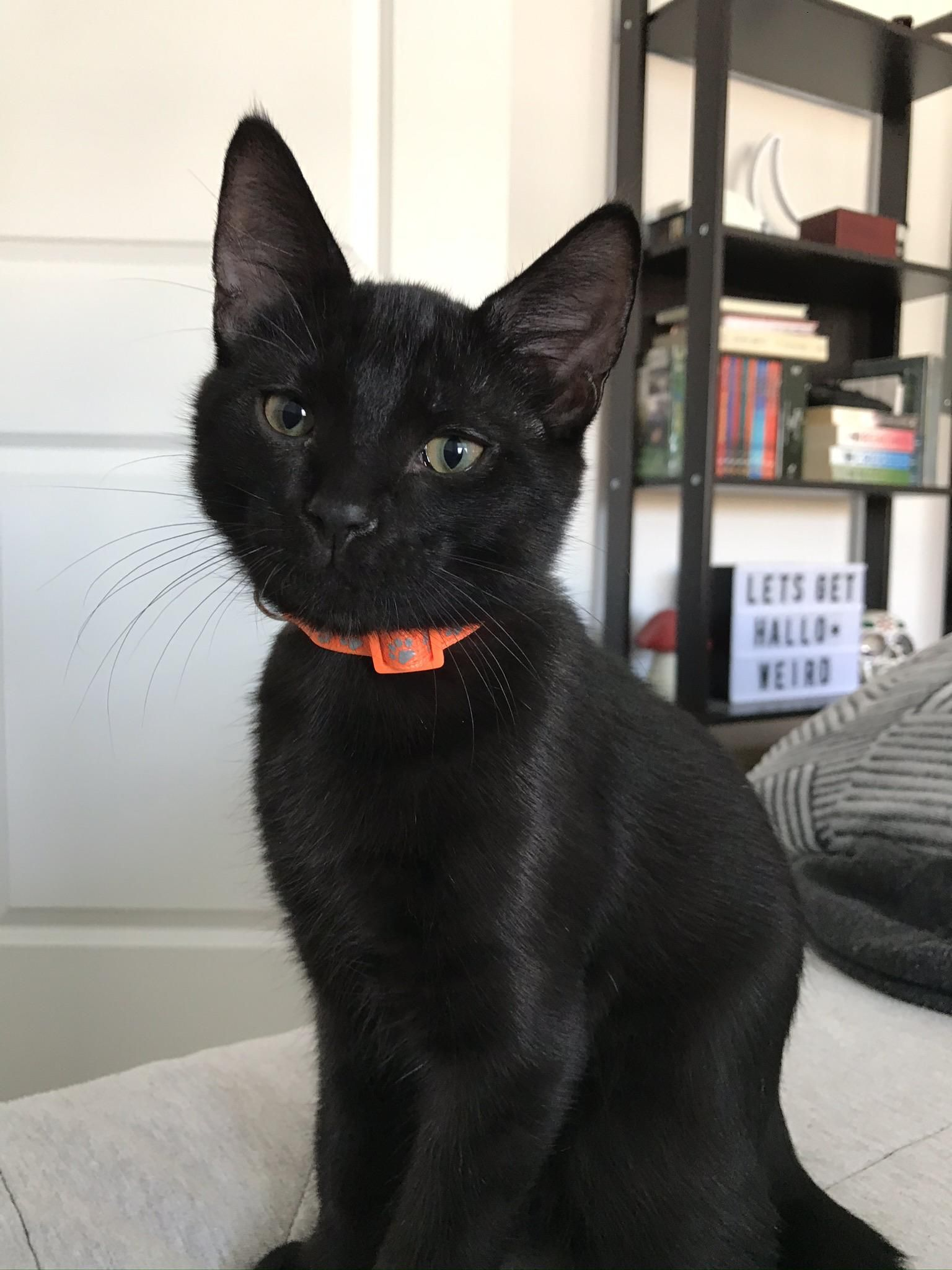 My Halloween Boy Pablo Pretty Cats Cats And Kittens Baby Cats