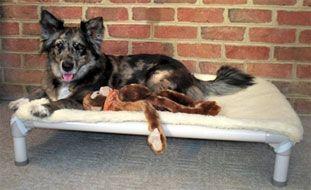 Standard Almond Pvc Dog Bed Kuranda Dog Beds Discount Pet Supplies Pet Mart