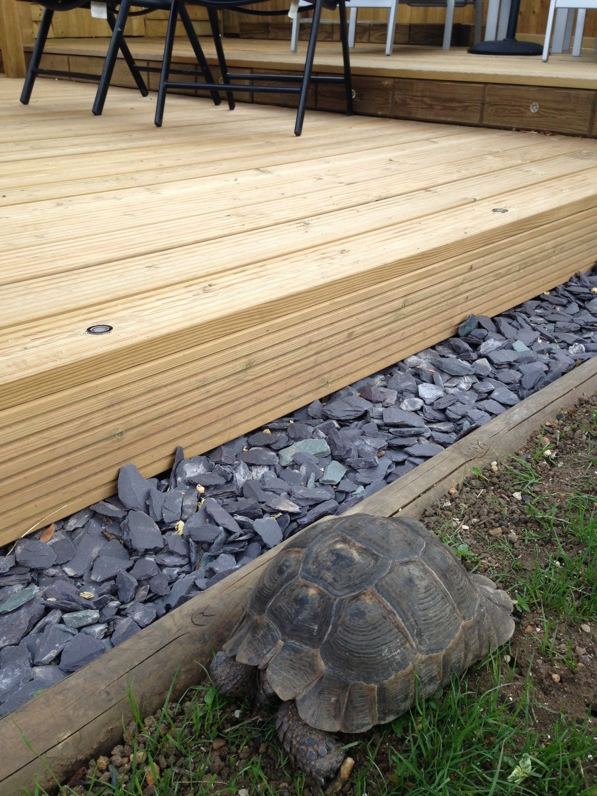 Close up Jacksons #timber #decking and Timmy the tortoise. Customer project: https://www.jacksons-fencing.co.uk/News/customer-projects/it-started-with-a-fence-5020.aspx?agid=597