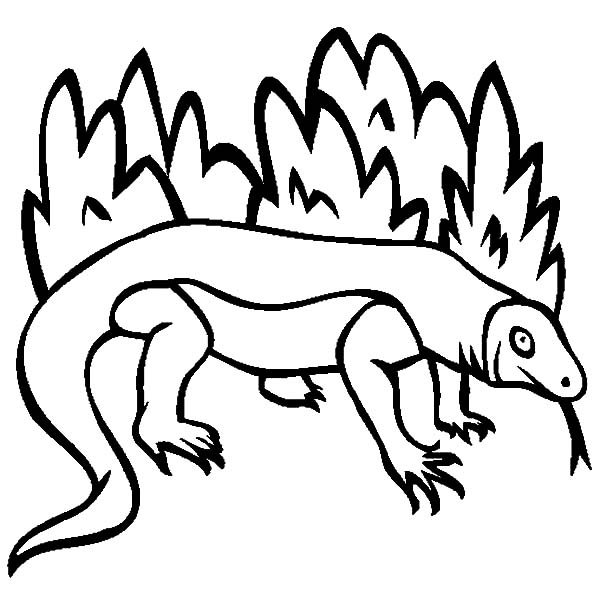 Komodo Dragon Outline Coloring Pages Download Print Online Coloring Pages For Free Color Turtle Coloring Pages Online Coloring Pages Dragon Coloring Page
