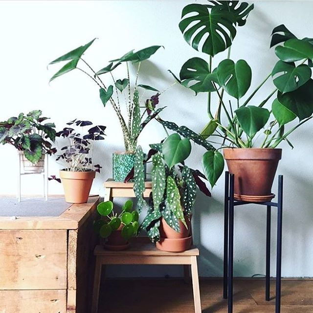 Plants Inside Rooms: Naturally Aesthetic Urban Interiors // Bringing Outdoors