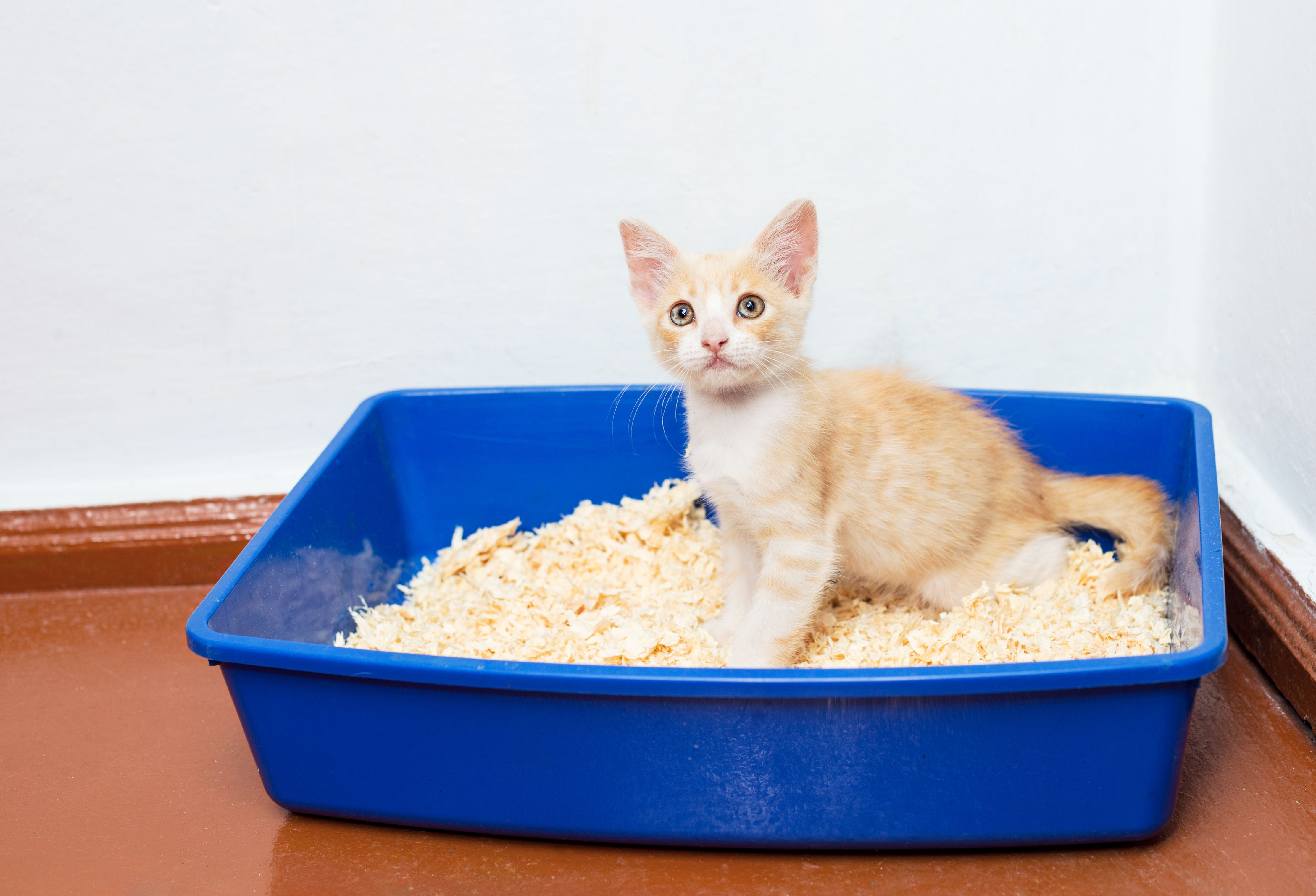 How To Get Rid Of The Smell Of Cat Urine Training a