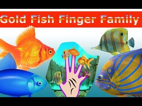 Gold Fish Finger Family Nursery Children 3d  Rhyme   Fish finger Family ...