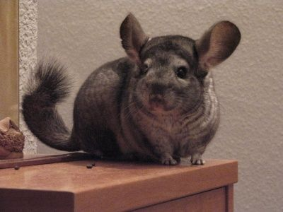 10 Small Animals That Can Make Great Pets With Images Pets