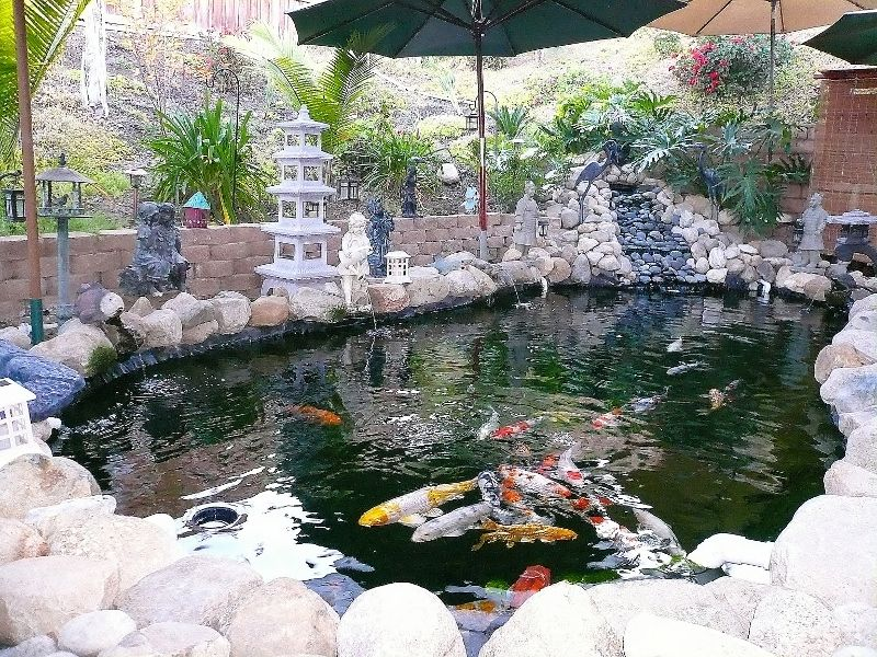 Koi Pond Kits With Small Pond Fountains With Koi Pond Water