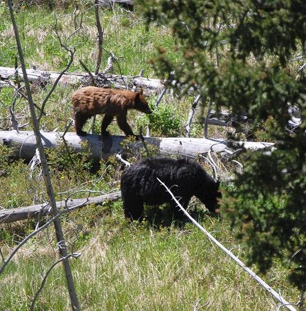 Amazingly, we got up at 4:30 this morning and were in the Jeep on our way to Yellowstone National Park at 5:00 a.m. in an attempt to see as much wildlife in the park as we could. We covered the...