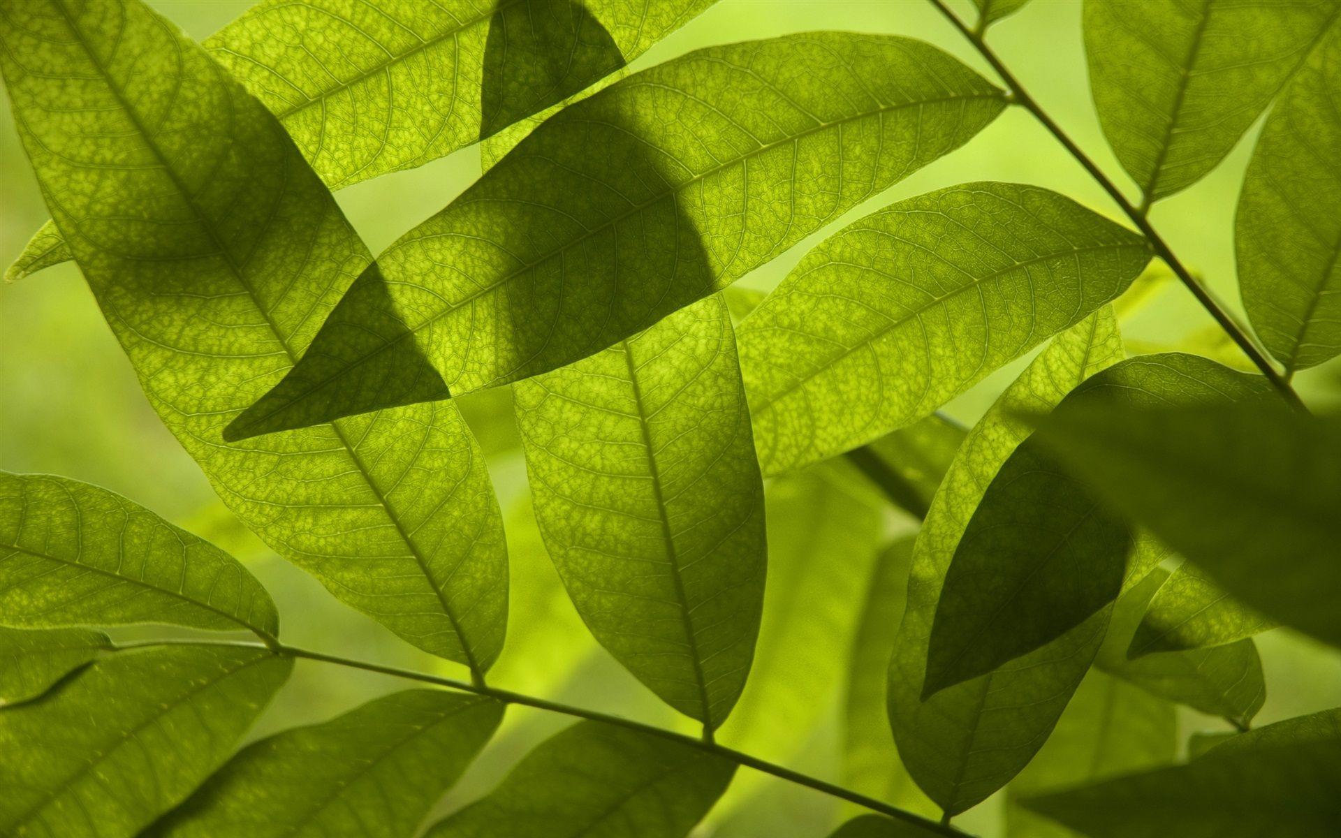 Fondos de pantalla verde hoja