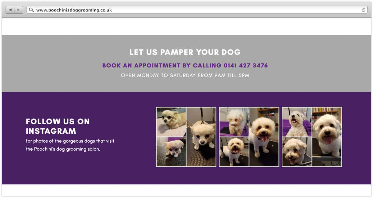5 Things You Should Have On Your Pet Business Homepage in