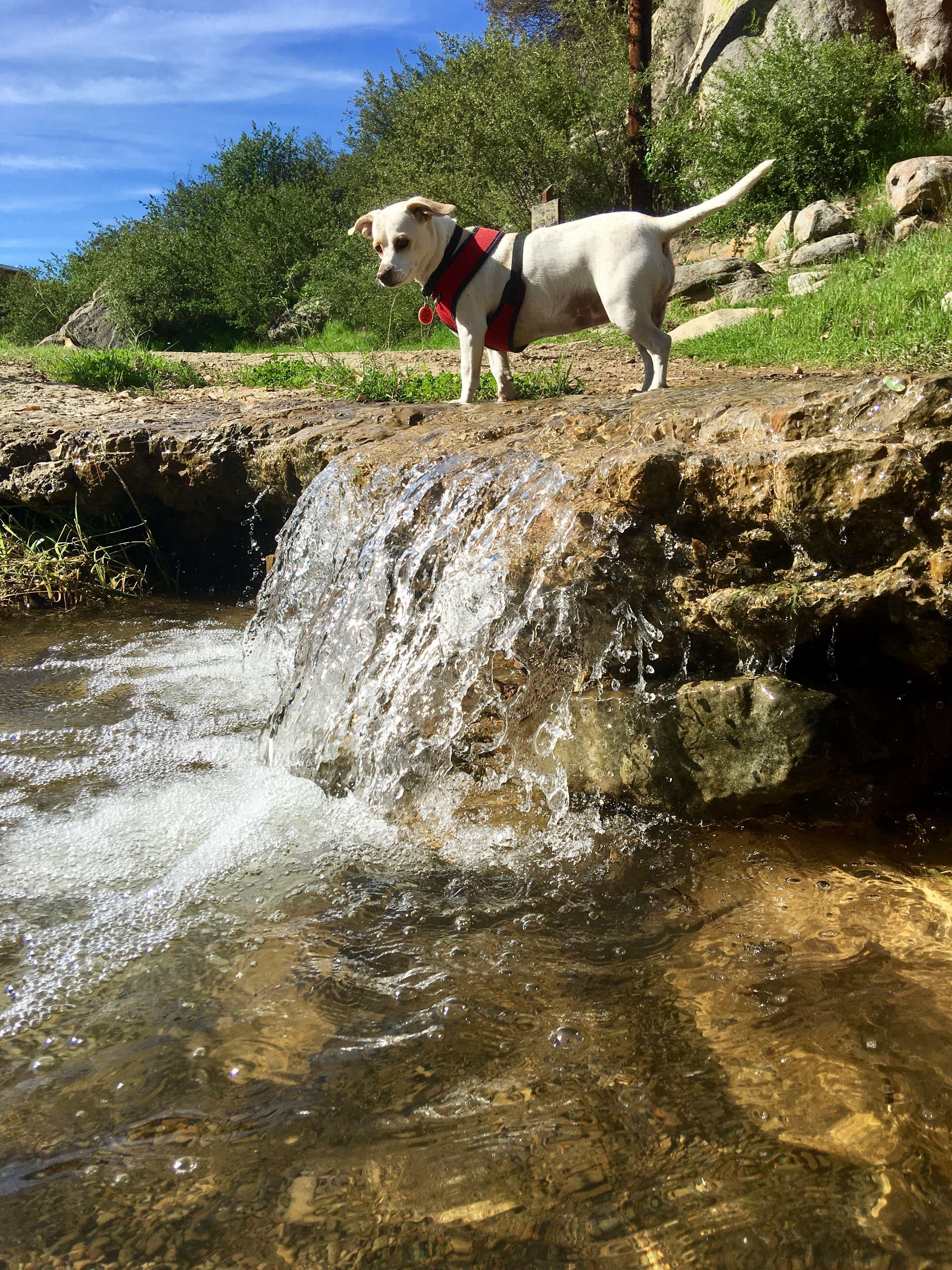 Do i take the rapids rapids animals daily walk