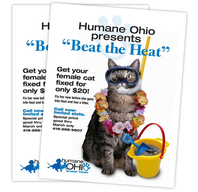 Beat The Heat Flyer Animal Rescue Ideas Beat The Heat Dog Dental