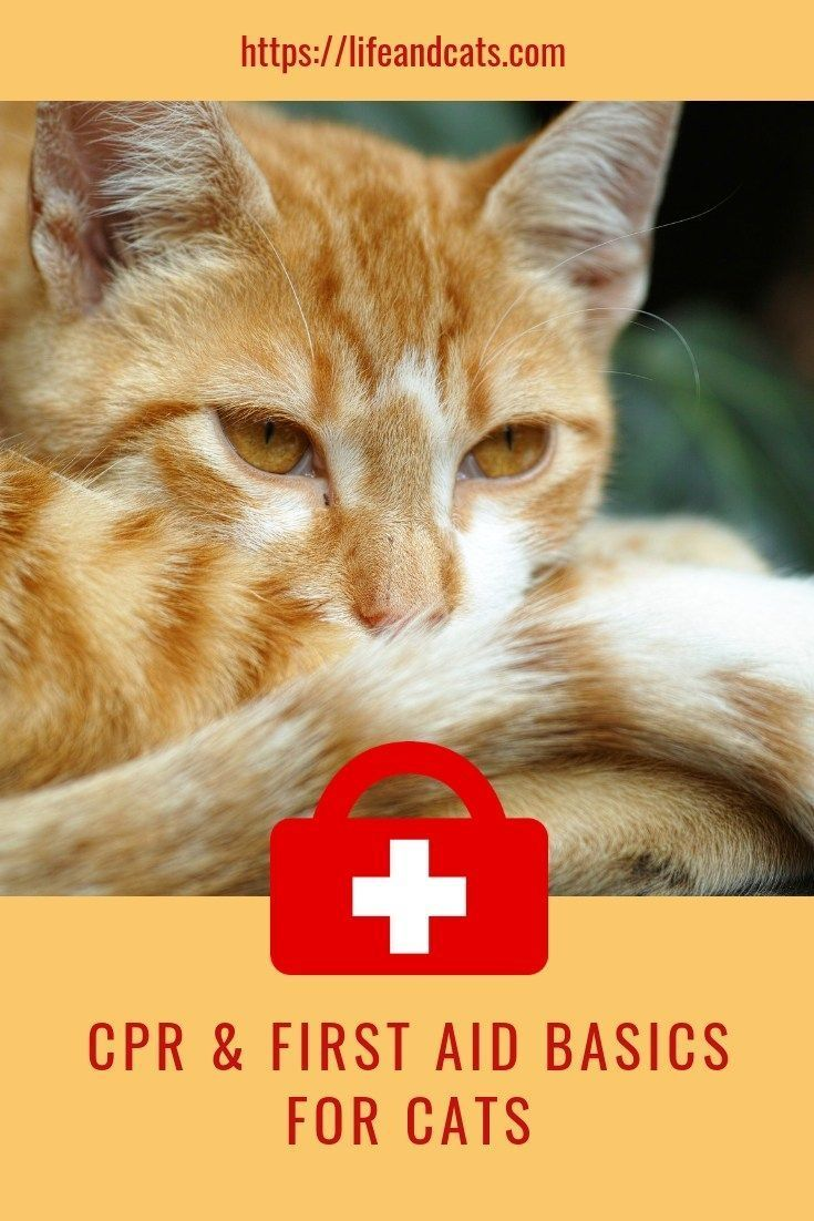 Could You Aid Kitty In A Crisis Cat First Aid Tips Cat Care Cat Training Cats