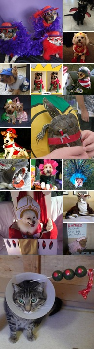 Watch All You Is Now A Part Of Southern Living Pet Holiday Cute Halloween Costumes Pet Halloween Costumes