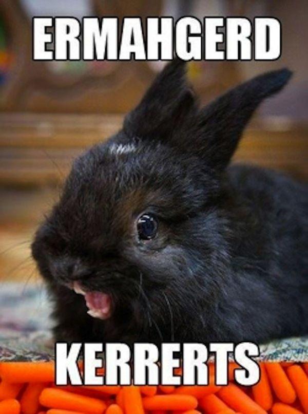 """7 Super Excited """"Ermahgerd"""" Animals"""