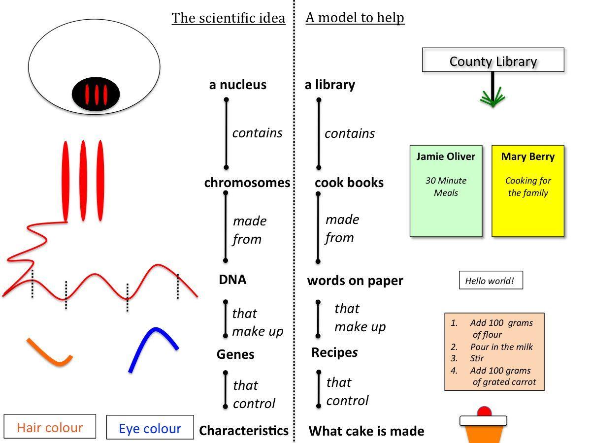 medium resolution of organisation of genetic material inside the nucleus