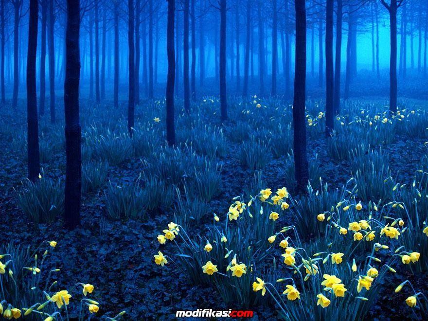 20 Tempat Unik Dan Keren Di Dunia Yang Ternyata BenarBenar Ada is part of Black forest germany -