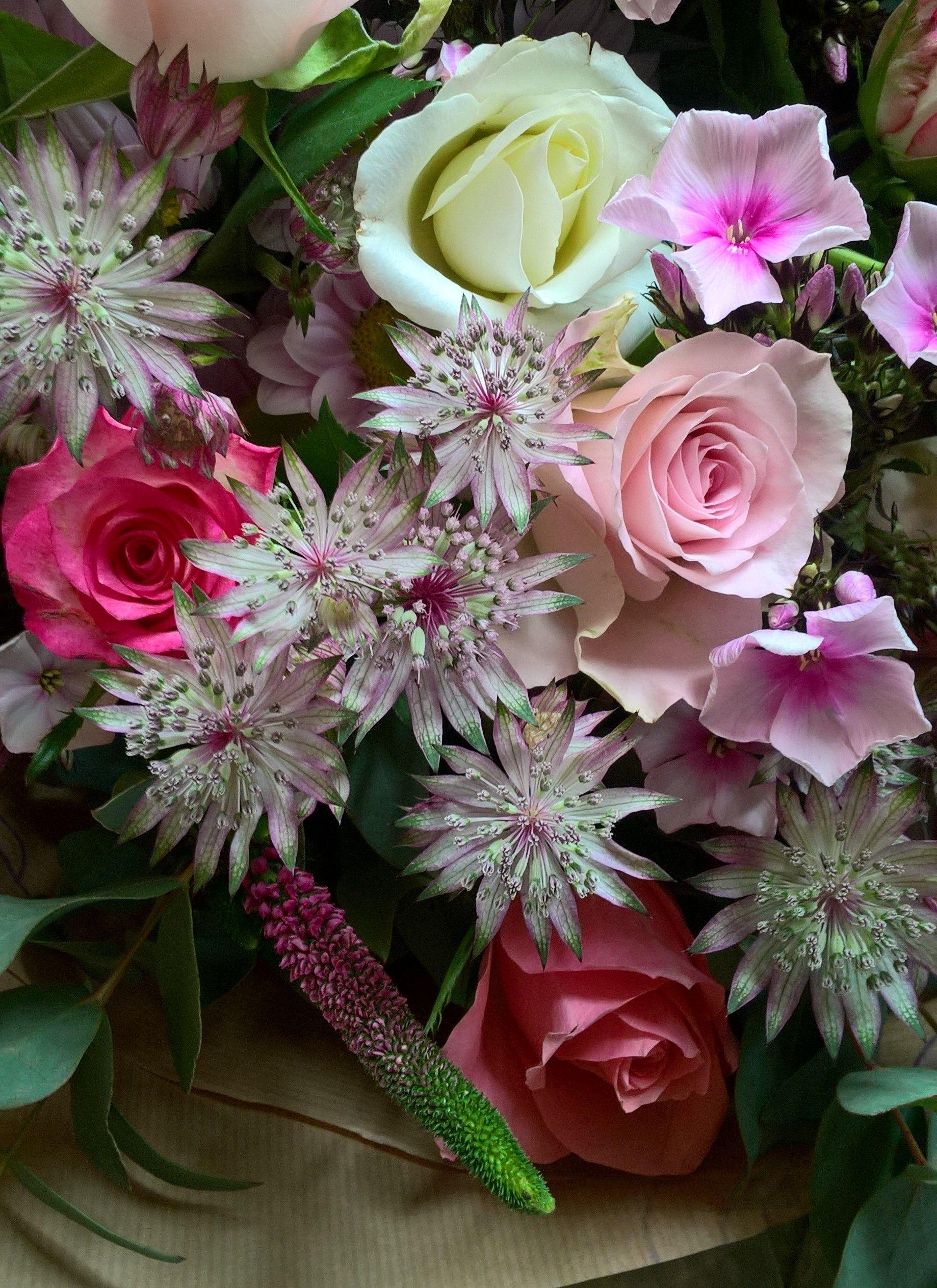 Astrantia Veronica And Phlox Beautiful Seasonal Spring Flowers