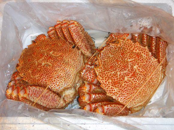 Hairy crab from Abashiri, Hokkaido