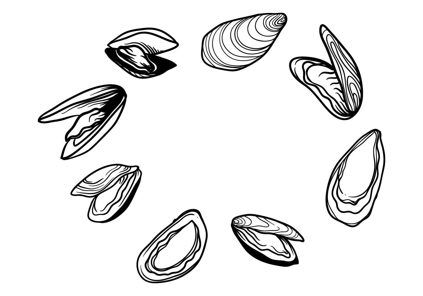 hight resolution of free hand drawn mussel vector